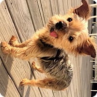 Adopt A Pet :: Bristow - West Milton, PA