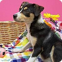 Adopt A Pet :: Alison - Decatur, AL