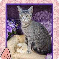 Adopt A Pet :: Ash - Arlington/Ft Worth, TX