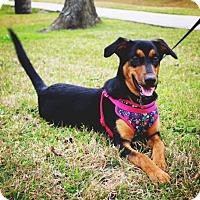 Adopt A Pet :: Flora - Lake Jackson, TX