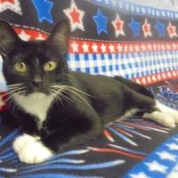 Adopt A Pet :: Mittens - Marshalltown, IA