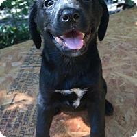 Adopt A Pet :: Effie - Louisville, KY