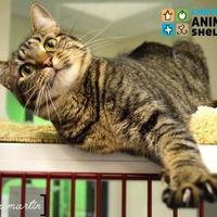 Adopt A Pet :: Febe - Cheyenne, WY