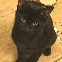 Adopt A Pet :: Maui - College Station, TX