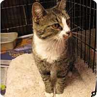 Adopt A Pet :: Crimson - Centerburg, OH