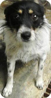 Terrier (Unknown Type, Medium) Mix Dog for adoption in Laingsburg, Michigan - Pippy