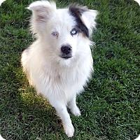 Adopt A Pet :: Elliott - DEAF - PENDING ADOPT - Post Falls, ID