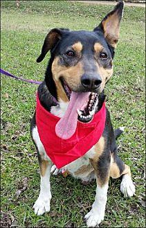 Hound (Unknown Type)/Shepherd (Unknown Type) Mix Dog for adoption in Simsbury, Connecticut - Daylee