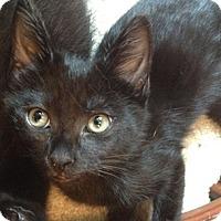 Adopt A Pet :: Fargo - North Highlands, CA