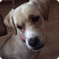 Adopt A Pet :: Wylie - Sugarland, TX