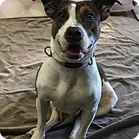 Adopt A Pet :: Betty Sue - Philadelphia, PA
