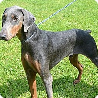 Adopt A Pet :: Drake - Brunswick, ME