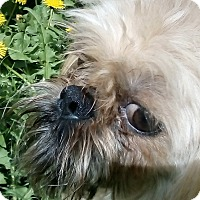 Adopt A Pet :: Boris - Antioch, IL