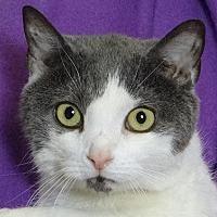 Adopt A Pet :: Quinn - Renfrew, PA