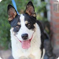 Adopt A Pet :: Spud - Fresno, CA