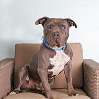Adopt A Pet :: Henry - Santa Paula, CA