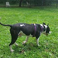 Adopt A Pet :: Joey - Crossville, TN