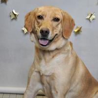 Adopt A Pet :: Sandy - Wantagh, NY