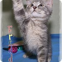 Adopt A Pet :: Freddie - Shippenville, PA
