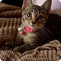 Adopt A Pet :: Emmie171411 - Atlanta, GA