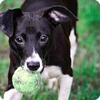 Adopt A Pet :: CiCi - Virginia Beach, VA