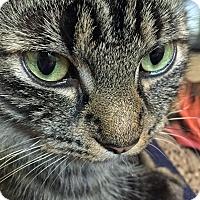 Adopt A Pet :: Sumatra - Troy, MI