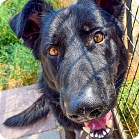 Adopt A Pet :: Shadow - Prosser, WA