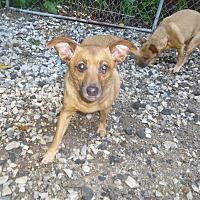 Adopt A Pet :: Ralph - Glastonbury, CT