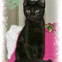 Adopt A Pet :: Onyx - Shippenville, PA