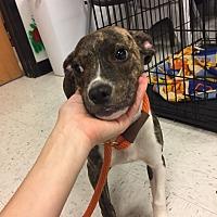 Adopt A Pet :: Five - Monticello, GA