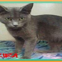 Adopt A Pet :: KIRA - Fort Walton Beach, FL