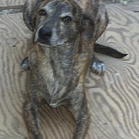 Adopt A Pet :: Poko and Poncho - Stockton, CA