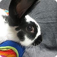 Adopt A Pet :: Keir - Newport, DE