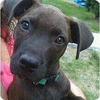 Adopt A Pet :: Striker (ADOPTED!!) - Albany, NY