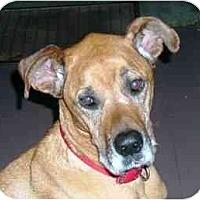 Adopt A Pet :: PEPPER - Martinsburg, WV