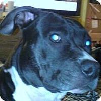 Adopt A Pet :: Girl CP - Dayton, OH