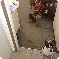 Adopt A Pet :: Molly - Milton, FL