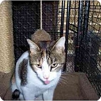 Adopt A Pet :: Sweetheart - Jenkintown, PA