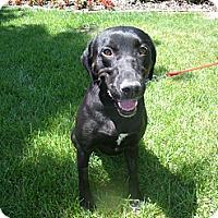 Adopt A Pet :: Vanna - Lewisville, IN