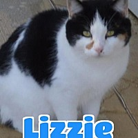 Adopt A Pet :: #6-3734 Lizzie - foster GB - Lawrenceburg, KY