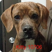 Adopt A Pet :: Kitty - Greencastle, NC