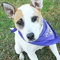 Cattle Dog/Shepherd (Unknown Type) Mix Dog for adoption in Detroit, Michigan - Bella