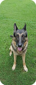German Shepherd Dog Mix Dog for adoption in Greeneville, Tennessee - Jameson