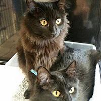 Adopt A Pet :: Nadia - Woodland Hills, CA