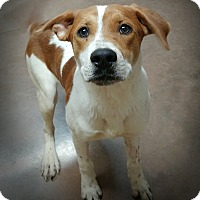 Adopt A Pet :: Groves - Wilmington, OH