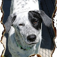 Adopt A Pet :: Petey - Crowley, LA