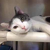 Adopt A Pet :: B-1 - Triadelphia, WV