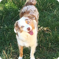 Adopt A Pet :: Zoey - Greeley, CO