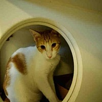 Adopt A Pet :: *CARROT TOP - Long Beach, CA