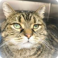 Adopt A Pet :: Spencer - Webster, MA